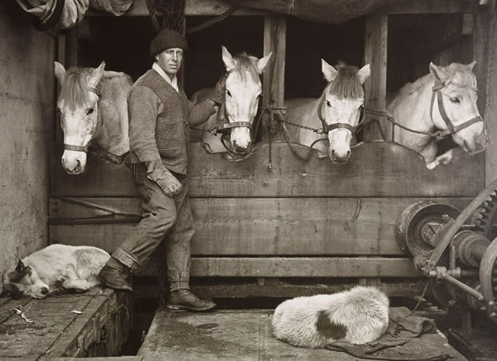 Terra Nova expedition: Captain Oates and Siberian ponies on board the 'Terra Nova'.
